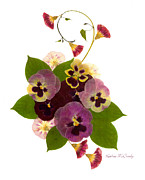 Purple Pansy Prints - Frivolity Print by Kathie McCurdy