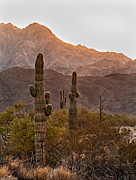 Barry Prints - Sonoran Desert Print by Robert Bales