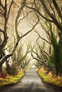 Tress Posters - The Dark Hedges Poster by Pawel Klarecki