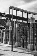 Camden Yards Framed Prints - Watch Out For Batted Balls Framed Print by Susan Candelario