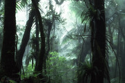 Puerto Rico Art - El Yunque National Forest by Thomas R Fletcher