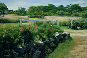 Cape Cod Paintings - A Place of Peace Marthas Vineyard by OMalley Keyes