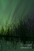 Bare Trees Metal Prints - Aurora Borealis Over Trees, Yukon Metal Print by Jonathan Tucker