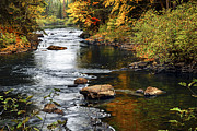 Autumn Foliage Photos - Forest river in the fall by Elena Elisseeva