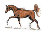 Horse Drawings - Monogramm by Angel  Tarantella
