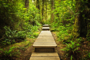 Outdoor Posters - Path in temperate rainforest Poster by Elena Elisseeva