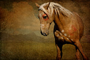 Paint Foal Metal Prints - Sundance Metal Print by Lyndsey Warren