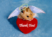 Jeanette Kabat - Thank You Hamster
