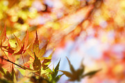 Abstract In Nature Prints - Autumn  Print by Les Cunliffe