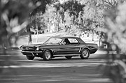 1965 Mustang Framed Prints - 1965 Shelby Prototype Ford Mustang Framed Print by Jill Reger