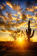 Burst Prints - A Desert Sunrise  Print by Saija  Lehtonen