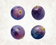 Ingredient Painting Framed Prints - Concord Grapes Framed Print by Danny Smythe