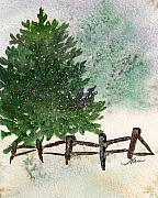 Nan Wright Prints - Snowy Pine Tree Print by Nan Wright