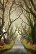 Dark Hedges Prints - The Dark Hedges Print by Pawel Klarecki