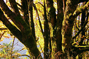 Woods Photo Prints - Autumn 3 Print by J D Owen