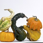 Bernard Jaubert - Gourds and pumpkins