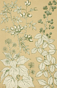 Floral Prints Prints - Leaves from Nature Print by English School
