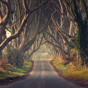 Dark Hedges Posters - The Dark Hedges  Poster by Pawel Klarecki