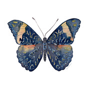 Watercolor. Butterfly Paintings - 89 Red Cracker Butterfly by Amy Kirkpatrick