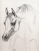 Horse Drawings - Arabian horse  by Angel  Tarantella