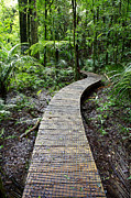 Bush Photos - Forest trail by Les Cunliffe