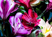 Donna Lee Prints - A Bouquet of Peruvian Lilies Print by Donna Lee