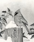 Cardinal Drawings Prints - A Cardinal And Holly Print by Sarah Batalka