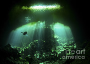 Water In Cave Posters - A Diver In The Garden Of Eden Cenote Poster by Karen Doody