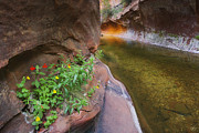 Oak Creek Canyon Posters - A Frogs Rest Poster by Peter Coskun