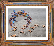 Pincher Framed Prints - A Gathering of Stars Framed Print by Betsy A Cutler East Coast Barrier Islands