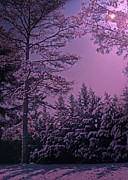 Snowy Night Photo Posters - A Quiet Snowy Night Poster by Lydia Holly