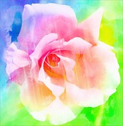 Portland Flowers Framed Prints - A Rainbow of a Rose Framed Print by Cathie Tyler