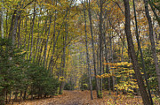 Ithaca Photos - A Walk In The Woods II by Michele Steffey