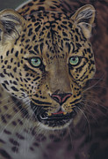 Leopard Pastels - After dark all cats are leopards by Karie-ann Cooper