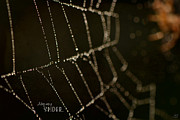 Spider Web Framed Prints - Along Came a Spider Framed Print by Lisa Knechtel