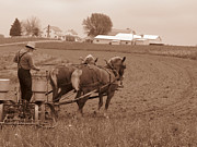 Amish Farmer Print by Janet Pugh