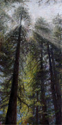 Pines Pastels Framed Prints - An Enchanted Forest Framed Print by Mary Giacomini