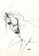 Wild Horses Drawings Metal Prints - Andalusian Horse Drawing 05 11 2013 Metal Print by Angel  Tarantella