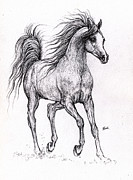 Horse Drawings - Arabian horse drawing 10 09 2013b by Angel  Tarantella