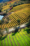 Sonoma County Originals - Arial Golden Vineyards by Kathy Sidjakov
