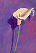 Arum Lily Framed Prints - Arum Lily Framed Print by Sara Hayward