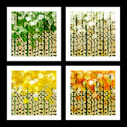 All - Aspen Colorado Abstract Square 4 In 1 Collection by Andee Photography