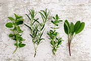 Fresh Green Posters - Assorted fresh Herbs Poster by Nailia Schwarz