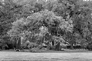 Steve Harrington - Audubon Park monochrome