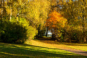 Autumn Landscape Art - Autumn in the Park by Lutz Baar