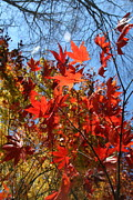 Neal Eslinger Photography Posters - Autumn Reach  Poster by Neal  Eslinger