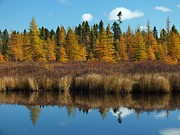 Photos Of Autumn Prints - Autumn Reflected Print by Gene Cyr