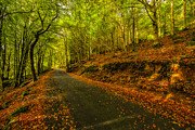 Wales Digital Art - Autumn Road by Adrian Evans