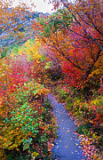 Turning Leaves Prints - Autumn Walk in Mt Timpanogos Utah Print by Edward Pollick