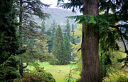Jenny Rainbow - Autumnal Trees in Benmore Botanical...